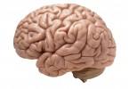 Autism - Analiza unui creier crescut in eprubeta