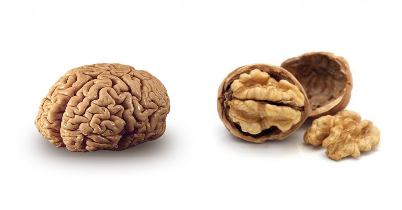 creierul asemanator unei nuci